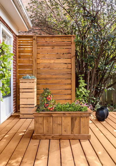 Kitchen Garden   Vegetable Garden Basil plant